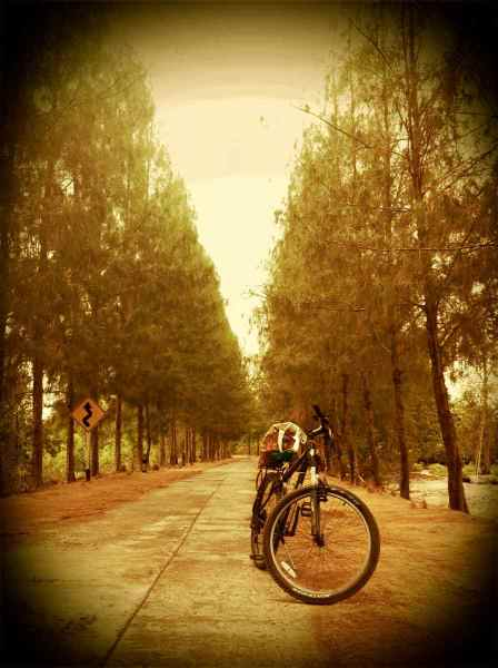 bike@mangrove forrest