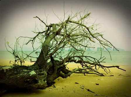 tree@beach1