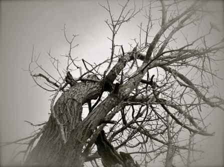 tree@beach3