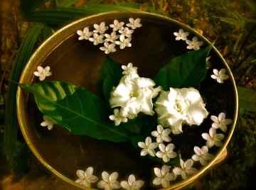 white flowers2