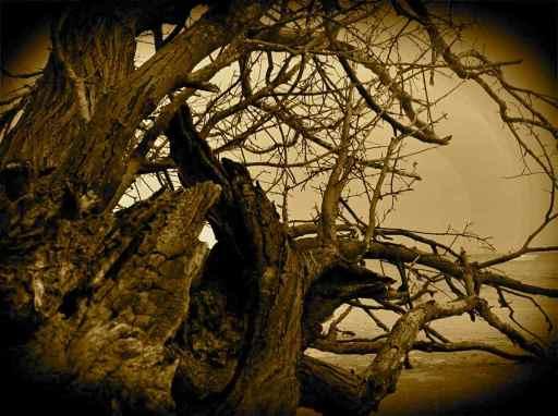 tree@beach2