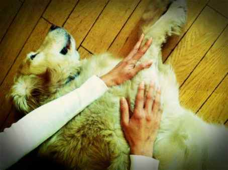 healing Angie's dogs2