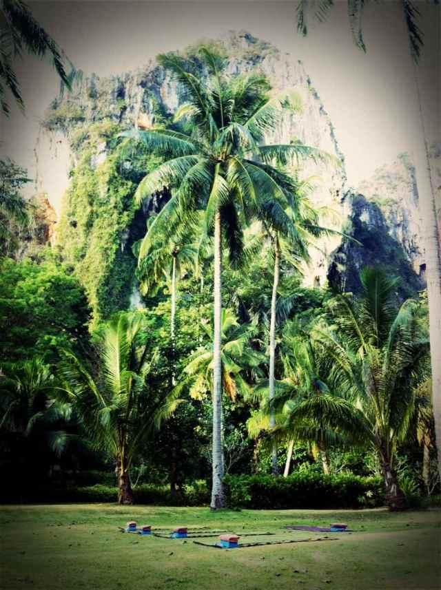 yoga@coconut lawn2