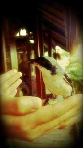 Ding's bird rescue3