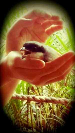Ding's bird rescue6