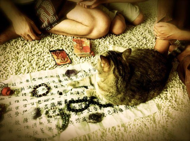 Reiki @Patrick's-cat